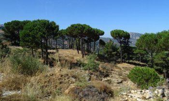 Pielgrzymka-Liban-Święty-Charbel (103)