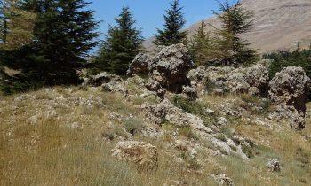 Pielgrzymka-Liban-Święty-Charbel (110)