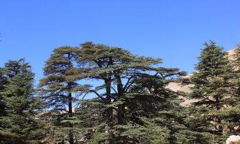 Pielgrzymka-Liban-Święty-Charbel (116)