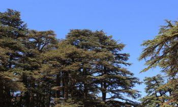 Pielgrzymka-Liban-Święty-Charbel (120)