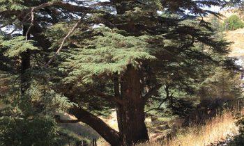 Pielgrzymka-Liban-Święty-Charbel (121)