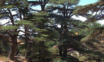 Pielgrzymka-Liban-Święty-Charbel (122)