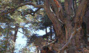 Pielgrzymka-Liban-Święty-Charbel (125)