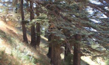Pielgrzymka-Liban-Święty-Charbel (126)
