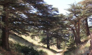 Pielgrzymka-Liban-Święty-Charbel (127)