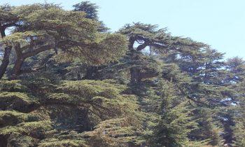 Pielgrzymka-Liban-Święty-Charbel (129)