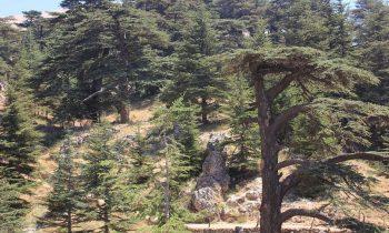 Pielgrzymka-Liban-Święty-Charbel (130)