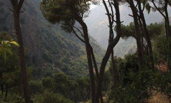 Pielgrzymka-Liban-Święty-Charbel (134)
