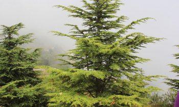 Pielgrzymka-Liban-Święty-Charbel (136)