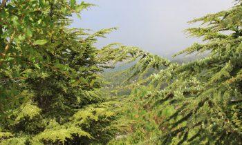 Pielgrzymka-Liban-Święty-Charbel (137)