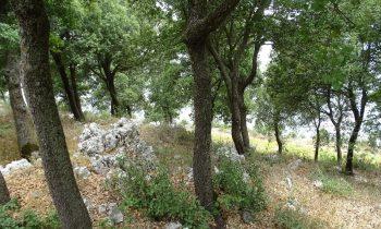 Pielgrzymka-Liban-Święty-Charbel (138)