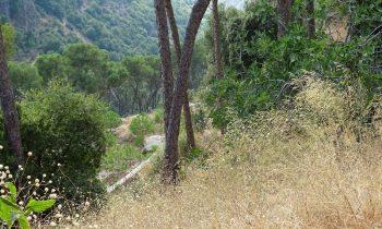Pielgrzymka-Liban-Święty-Charbel (143)
