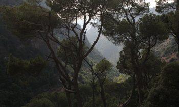 Pielgrzymka-Liban-Święty-Charbel (50)