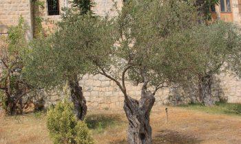 Pielgrzymka-Liban-Święty-Charbel (52)