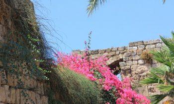 Pielgrzymka-Liban-Święty-Charbel (57)