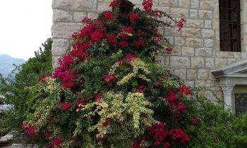 Pielgrzymka-Liban-Święty-Charbel (67)