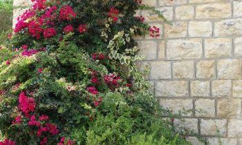 Pielgrzymka-Liban-Święty-Charbel (68)