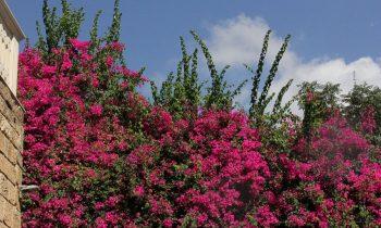 Pielgrzymka-Liban-Święty-Charbel (70)