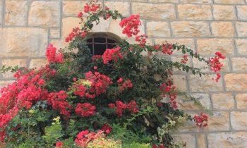 Pielgrzymka-Liban-Święty-Charbel (71)