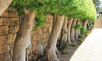 Pielgrzymka-Liban-Święty-Charbel (75)
