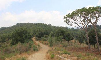Pielgrzymka-Liban-Święty-Charbel (93)