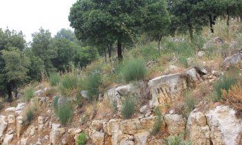 Pielgrzymka-Liban-Święty-Charbel (96)